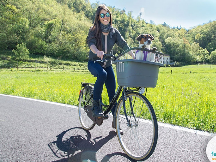 Cycling With Your Dog: Tips and Equipment